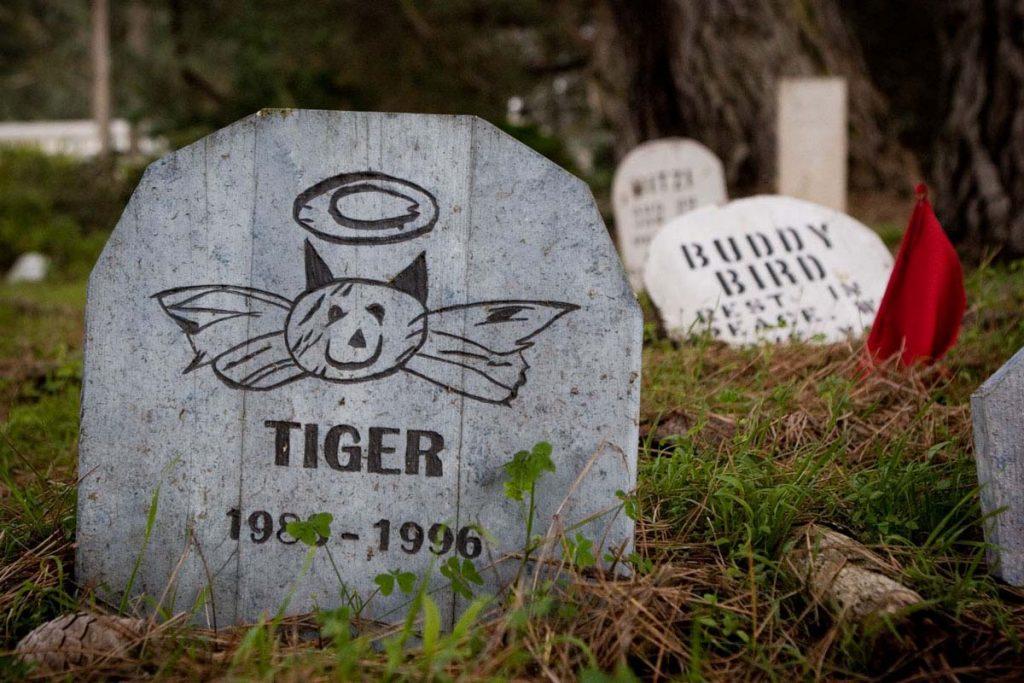 Augintiniu laidojimas